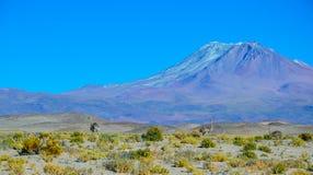 Eduardo Avaroa Andean Fauna National Reserve, Bolivia. Mountains and arid landscape with blue sky in Bolivia Stock Image