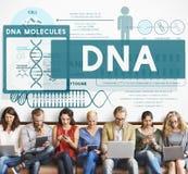 Educação do conhecimento que aprende o conceito das moléculas do ADN fotografia de stock royalty free