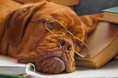 Educación del perro imagenes de archivo