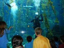 Educación subacuática Imágenes de archivo libres de regalías