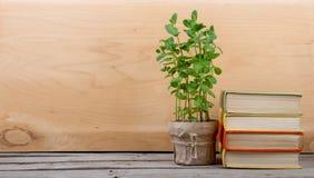 Educación y concepto de la lectura - libros y planta verde foto de archivo libre de regalías