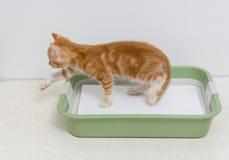 Educando o gatinho ao toalete Fotografia de Stock Royalty Free