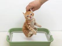 Educando o gatinho ao toalete Imagem de Stock