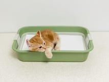 Educando o gatinho ao toalete Foto de Stock