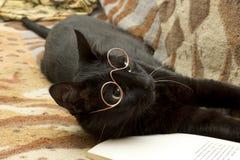 educated cat - photo #34