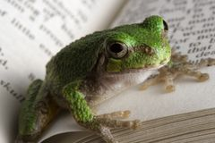 Educated Frog Stock Image