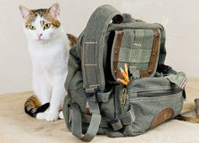 Education. Theme: Backpack with pencils and cat Royalty Free Stock Photos