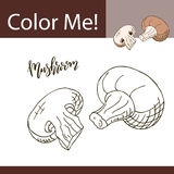 Education coloring page with vegetable. Hand drawn vector illustration of mushroom. Royalty Free Stock Photo