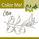 Education coloring page with vegetable. Hand drawn vector illustration of olive. Stock Images