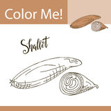 Education coloring page with vegetable. Hand drawn vector illustration of shallot. Stock Images