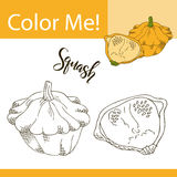 Education coloring page with vegetable. Hand drawn vector illustration of squash Royalty Free Stock Image