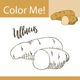 Education coloring page with vegetable. Hand drawn vector illustration of ullucus. Stock Photo