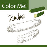 Education coloring page with vegetable. Hand drawn vector illustration of zucchini. Stock Photography