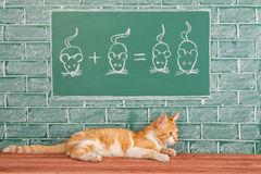 Education idea with Red Cat Stock Photos