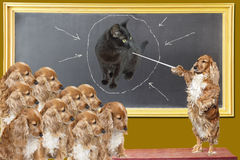 Education lesson for dogs Royalty Free Stock Photo