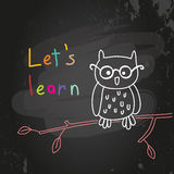 Education owl Stock Image