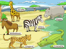 Educational game African savannah animals Royalty Free Stock Photo