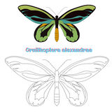Educational game coloring book  butterfly vector Royalty Free Stock Photos
