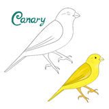 Educational game coloring book canary bird Royalty Free Stock Images