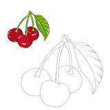 Educational game coloring book cherry fruit vector Stock Images