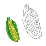 Educational game coloring book corn fruit  vector Royalty Free Stock Photos