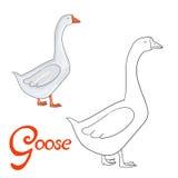 Educational game coloring book goose bird  vector Stock Photo