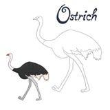 Educational Game Coloring Book Ostrich Bird Stock Photos