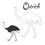 Educational game coloring book ostrich bird Stock Photos