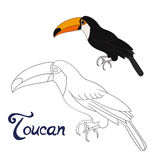 Educational game coloring book toucan bird vector Stock Images