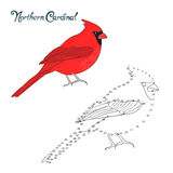 Educational game connect dots draw cardinal bird Royalty Free Stock Photography