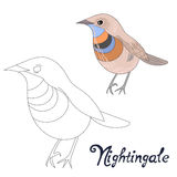 Educational game connect dots draw nightingale Stock Photography