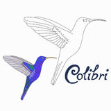 Educational game connect dots to draw colibri bird Royalty Free Stock Photos