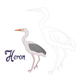 Educational game connect dots to draw heron bird Royalty Free Stock Image