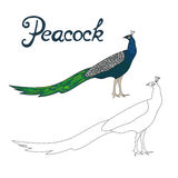 Educational game connect dots to draw peacock bird vector illustration