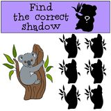 Educational game: Find the correct shadow. Little cute baby koal. A sits on the tree branch and smiles Royalty Free Stock Image