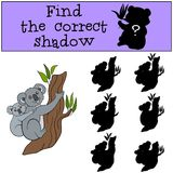 Educational game: Find the correct shadow. Mother koala with bab. Educational game: Find the correct shadow. Mother koala sits on the tree branch with her little Stock Photography