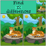Educational game: Find differences. Cute jaguaron the stone. Educational game: Find differences. Cute spotted jaguar lays on the stone in the forest and smiles Royalty Free Stock Images