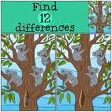 Educational game: Find differences. Four koala babies smile. Educational game: Find differences. Four koala babies sit on the tree in the forest and smile Stock Photo