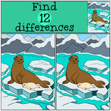 Educational game: Find differences. Mother fur seal with her baby Stock Photos