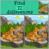 Educational game: Find differences. Mother jaguar with her cubs. Stock Image