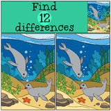 Educational game: Find differences. Two little cute seals. Royalty Free Stock Image