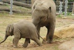 Educazione della tazza dell'elefante Fotografie Stock