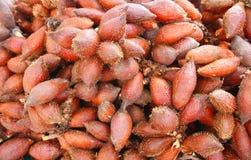 Edulis Thais salafruit van Zalacca Royalty-vrije Stock Fotografie