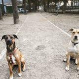 Eduque los perros foto de archivo libre de regalías