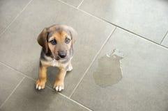 Eduque su animal doméstico fotografía de archivo libre de regalías