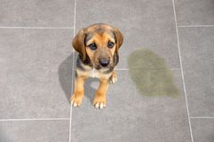 Eduque su animal doméstico foto de archivo
