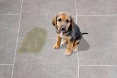 Eduque su animal doméstico imágenes de archivo libres de regalías