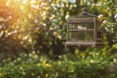 Edwardian fågelbur Arkivfoto