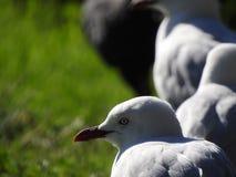 Edwards湖Birdy 免版税库存照片