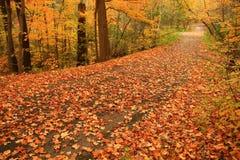 Edwards Gärten in Toronto ist eine Flamme der Farbe am Tag eines ruhigen Herbstes. Lizenzfreies Stockfoto